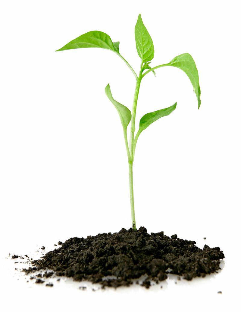 gron-planta-som-vaxer